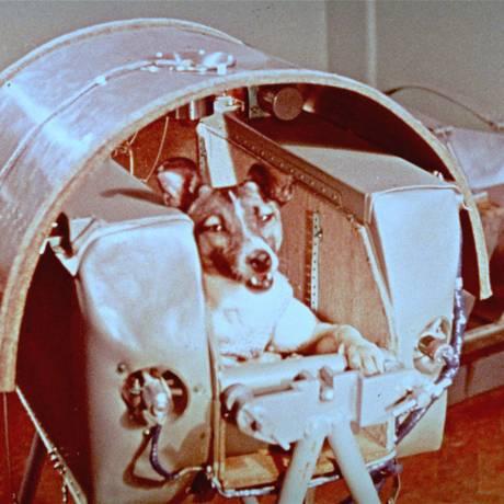 Imagem divulgada pela então União Soviética em 1957 mostra a cadela Laika no assento no qual foi para o espaço a bordo da cápsula Sputnik 2 em 3 de novembro daquele ano Foto: Reprodução