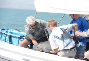 Cientistas com a vaquita marinha Foto: HANDOUT / REUTERS