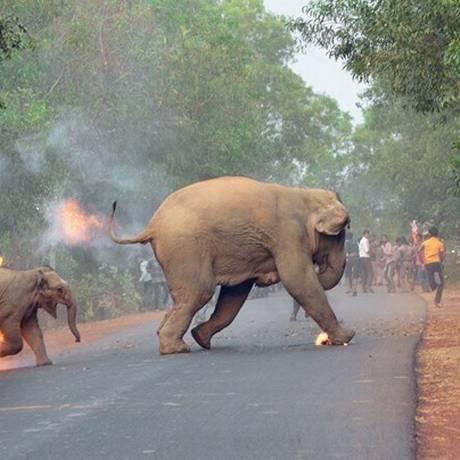 Elefantes fugindo em chamas Foto: Biplab Hazra/Sanctuary Magazine