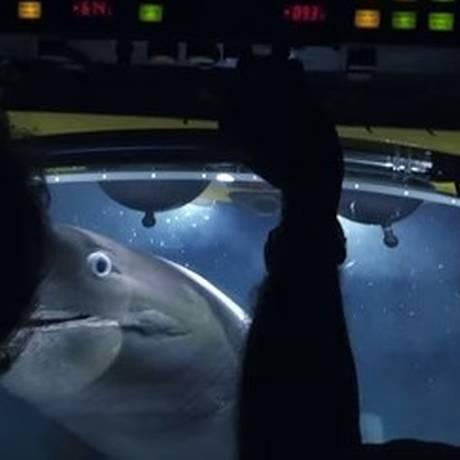 Equipe da BBC sofre ataque de tubarões no fundo do mar Foto: Reprodução / Youtube