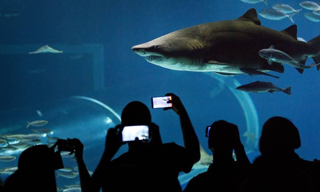Quando surgiu, em novembro, de 2016, o AquaRio tinha como maior atração um tanque com 3,5 milhões de litros de água e 2 mil espécies de animais Mônica Imbuzeiro / Agência O Globo