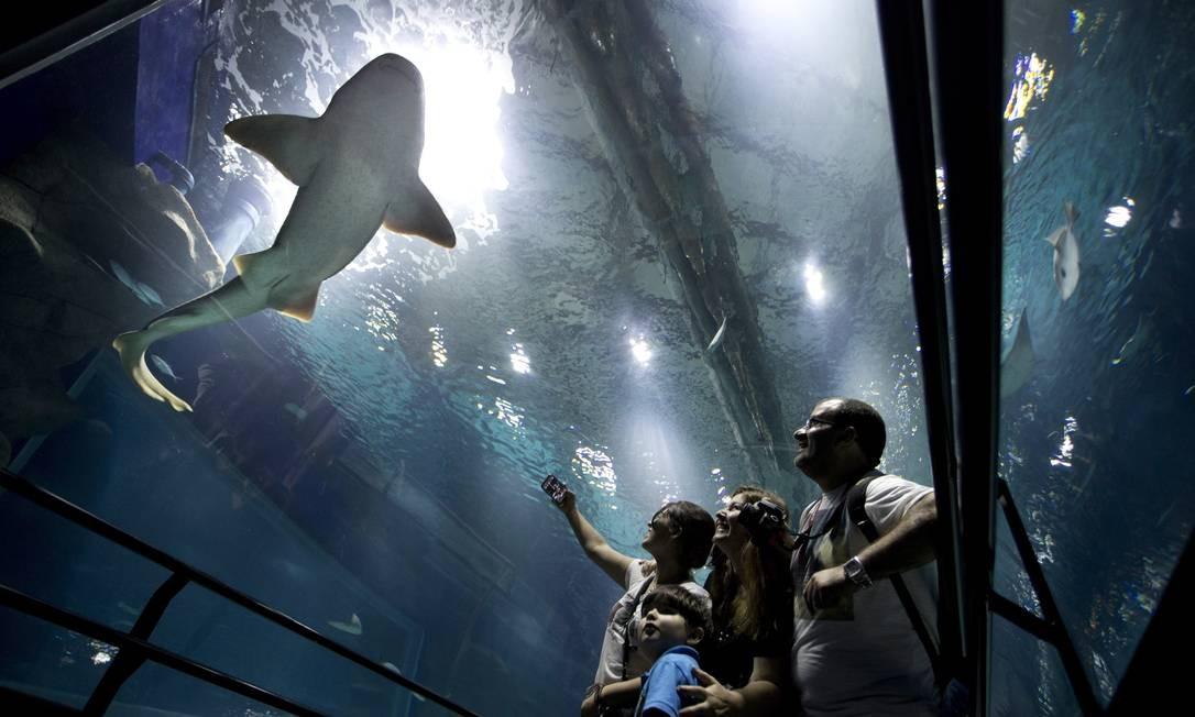 Hoje, o número de espécies no tanque do AquaRio mais que dobrou, subindo para 4,8 mil Márcia Foletto / Agência O Globo