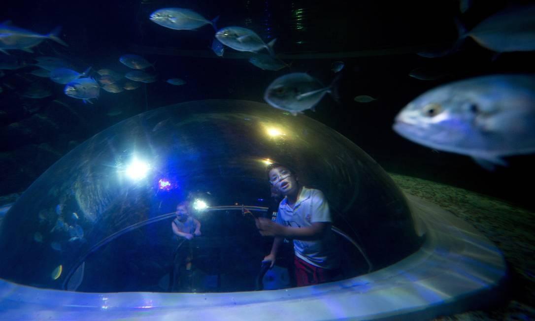 Desde a sua inauguração, o AquaRio também se tornou um xodó das crianças, que se sentem atraídas pelas diversas espécies marinhas do local Márcia Foletto / Agência O Globo