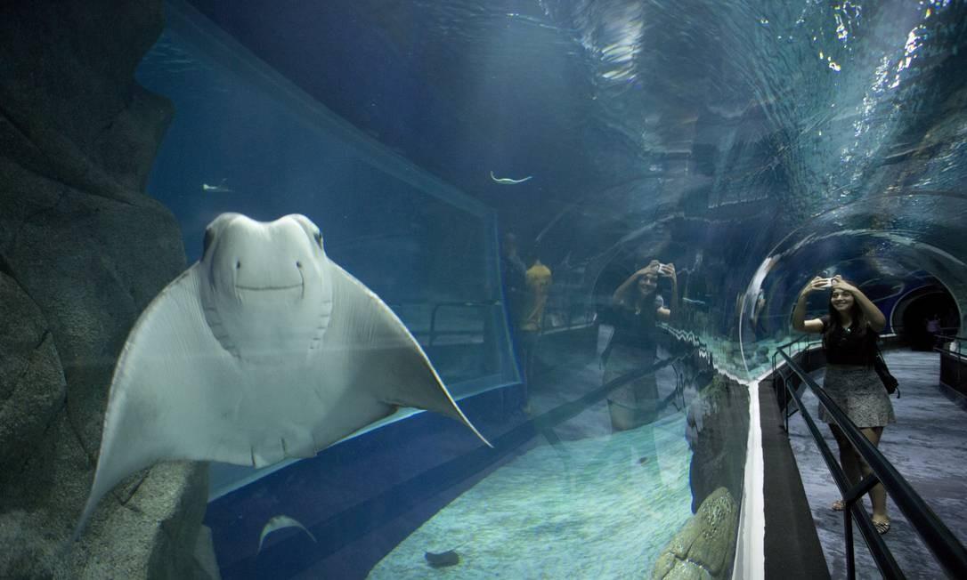 AquaRio. O maior aquário marinho da América do Sul conta com mais de oito mil animais de 350 espécies em exposições permanentes e temporárias. Via Binário do Porto 194, Gamboa — 3613-0700. Aquário: diariamente, das 10h às 18h; R$ 80. Visita aos bastidores: qua e sáb, das 15h às 16h; R$ 70. Bastidores e aquário: R$ 110 (moradores do Rio) e R$ 130. Márcia Foletto / Agência O Globo