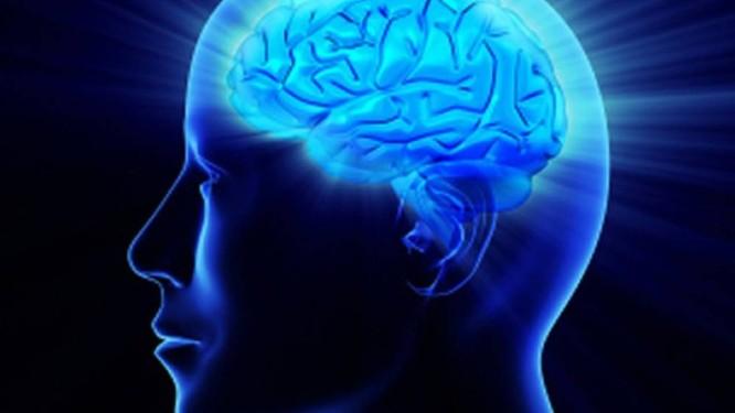 Cérebro humano Foto: Reprodução