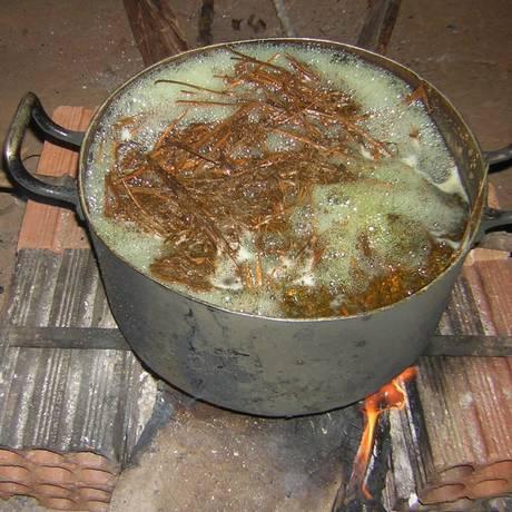 A ayahuasca é uma bebida produzida pela combinação da videira Banisteriopsis caapi com outras plantas Foto: Rafael Guimarães dos Santos