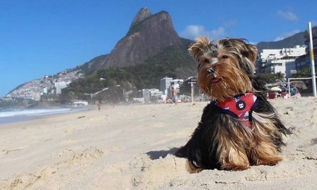 Donos de cães se mobilizam nas redes sociais para que animais possam ir legalmente às praias do Rio