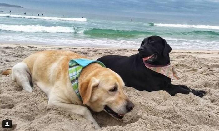 Os casal de labradores Polo e Mika fazem sucesso com suas fotos nas praias cariocas. Aoo todo, já são mais de 150 mil seguidores Foto: Reprodução / Instagram