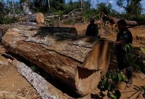 Agentes do Ibama apreendem madeira em operação contra exploração ilegal na Amazônia: dificuldade para conter desmatamento Foto: Bruno Kelly/Reuters