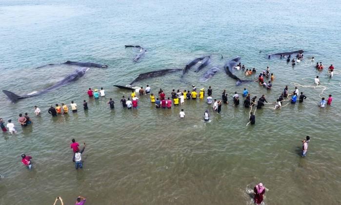 Morrem quatro das dez baleias encalhadas em ilha na indonsia imagem area mostra as baleias cercadas por equipes de resgate e ativistas chaideer mahyuddin afp stopboris Gallery
