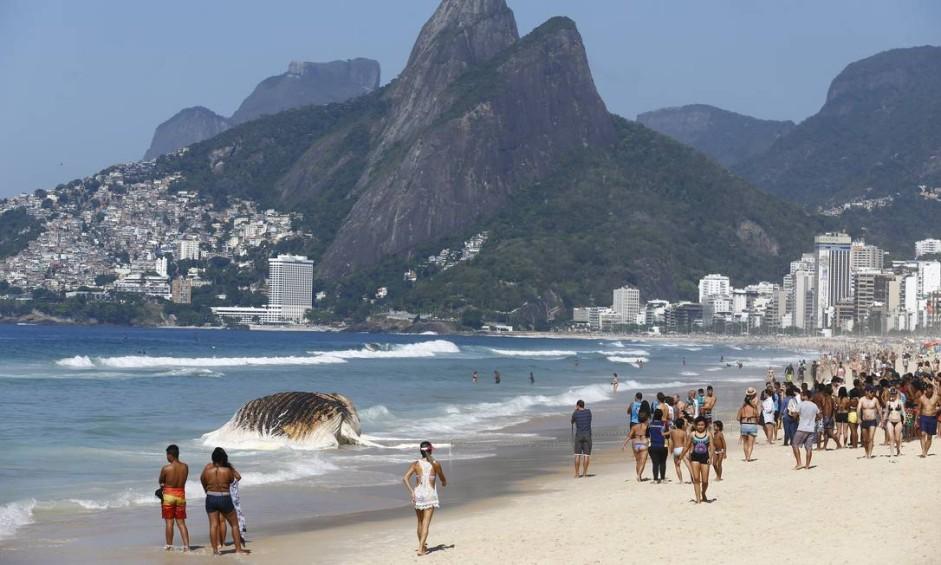 O resgate da baleia jubarte que apareceu morta na manhã desta quarta-feira na Praia de Ipanema, na Zona Sul do Rio, deve ser feito pelo mar Foto: Pablo Jacob / O Globo