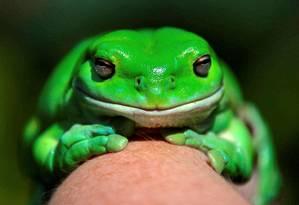 Informações poderão ser usadas para preservar espécies que estão ameaçadas de extinção Foto: DAVID GRAY / REUTERS