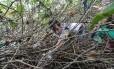 O ator Mateus Solano integra multirão de limpeza da lagoa de Marapendi, na Barra