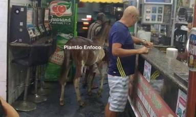 Cavalo passeia por bar em São Gonçalo Foto: Plantão Enfoco / Reprodução do Facebook