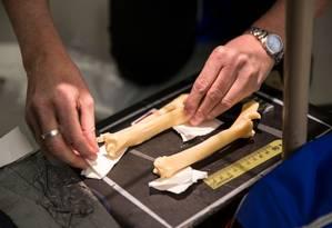 Os ossos de Dolly sendo ajustados para exame radiográfico Foto: Universidade de Nottingham