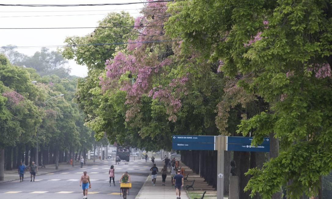 Uma bela alameda de sapucaias tinge de rosa o corredor de acesso ao Palácio da Quinta da Boa Vista Foto: Márcia Foletto / Agência O Globo