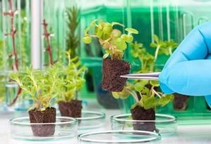 Análise científica das plantas: trabalho de agência americana começará em estufas e ambientes naturais simulados Foto: Shutterstock