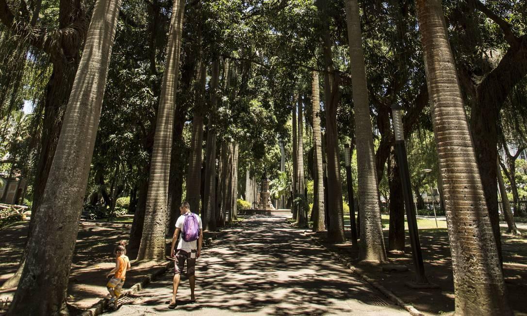 A alameda de palmeiras está no jardim desde o século XIX Foto: Ana Branco / Agência O Globo