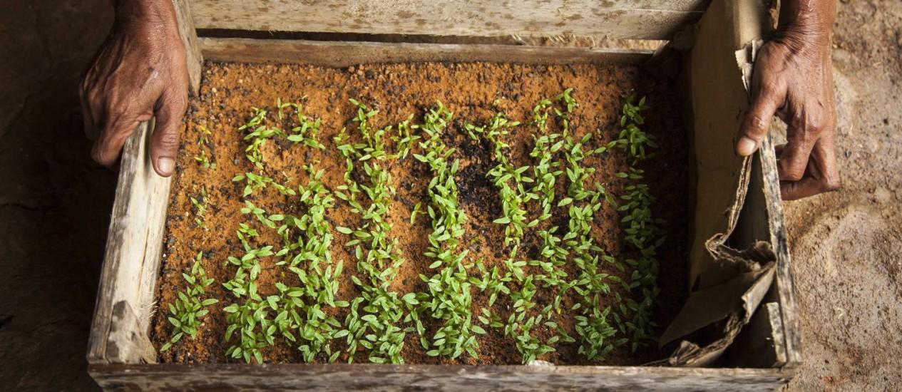 Agricultura familiar com técnica de agrofloresta em Silva Jardim, no interior do estado do Rio: exemplo de sustentabilidade Foto: Hermes de Paula/02-06-2016
