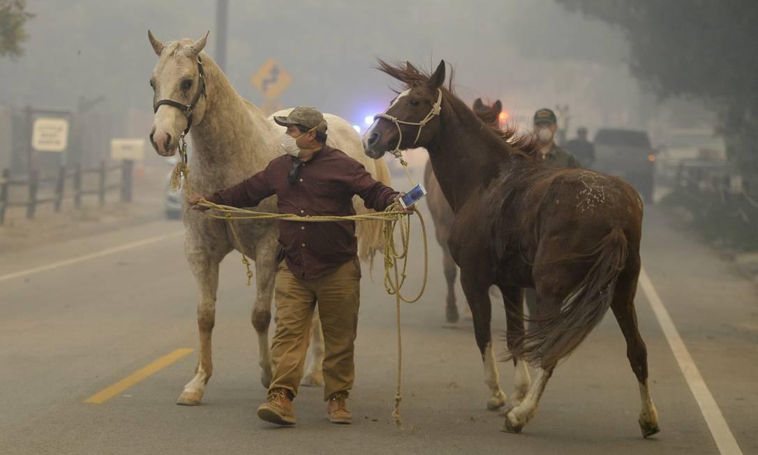 Moradores de Ventura retiram animais da cidade durante o violento incêndio David Crane / AP