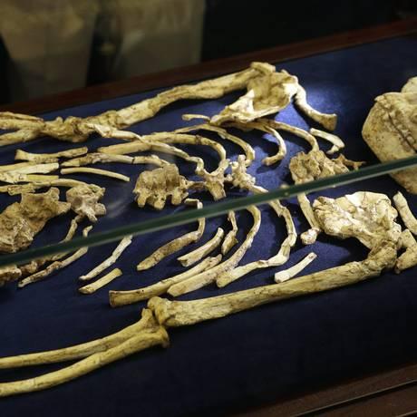 O esqueleto quase completo de 3,6 milhões de anos Foto: Themba Hadebe / AP