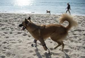 Cola caminhando na praia com suas próteses adaptadas Foto: LILLIAN SUWANRUMPHA / AFP
