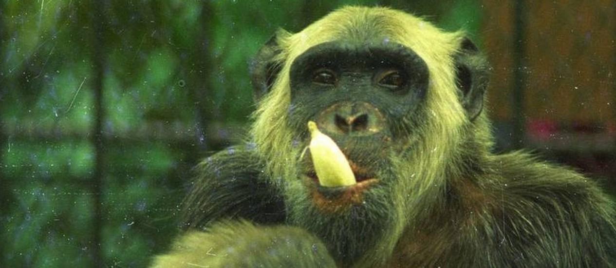 Cena do filme 'Macaco Tião - o candidato do povo' Foto: Divulgação