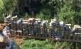 Tabletes de maconha encontrados em Três Rios Foto: Divulgação/PM