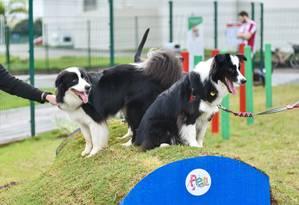 Cachorros se divertem no Pet Park Foto: Divulgação/Bruno Coelho