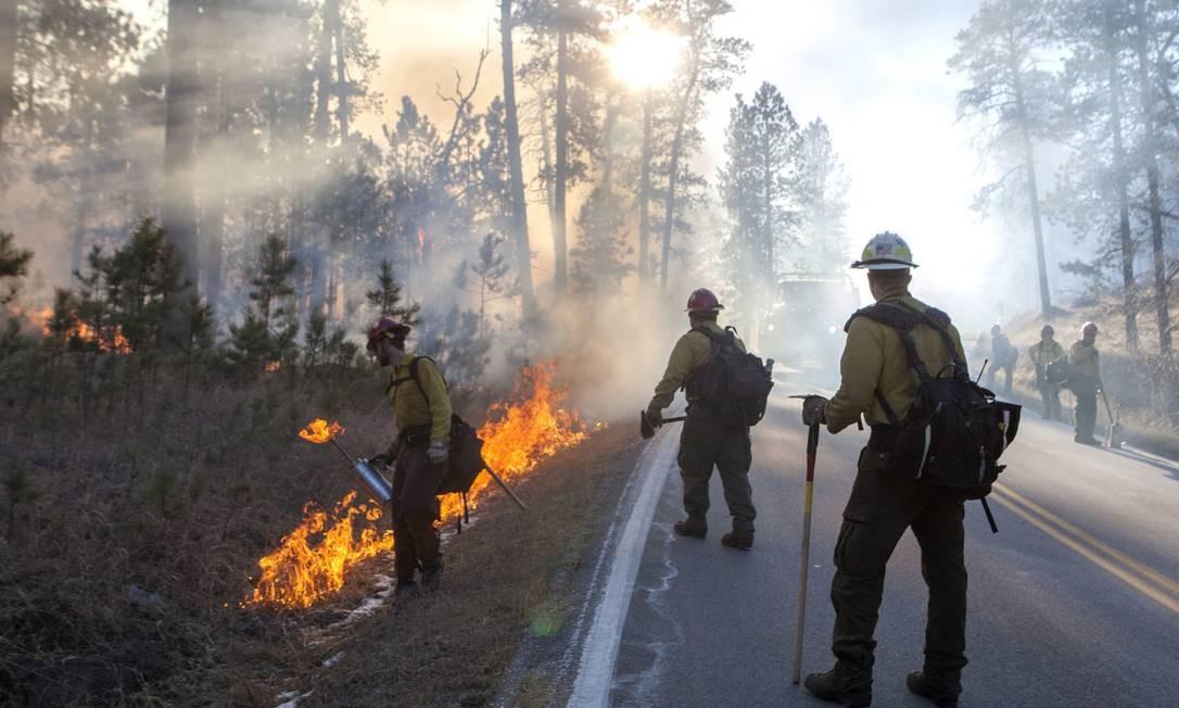 O incêndio no Custer State Park, em Dakota do Sul, destruiu fauna e flora em área superior a 200 km quadrados, no começo de dezembro. Depois de controlado o fogo, o parque foi parcialmente reaberto. Autoridades acreditam que o acidente não vá prejudicar o turismo no local em 2018 Foto: Hannah Hunsinger / AP