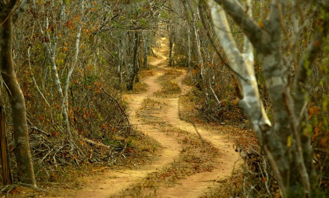 Estradas como essa, aberta no Parque Nacional da Serra da Capivara, no Piauí, contribuem para destruir espécies da Caatinga Foto: / Marizilda Cruppe/16-07-2003