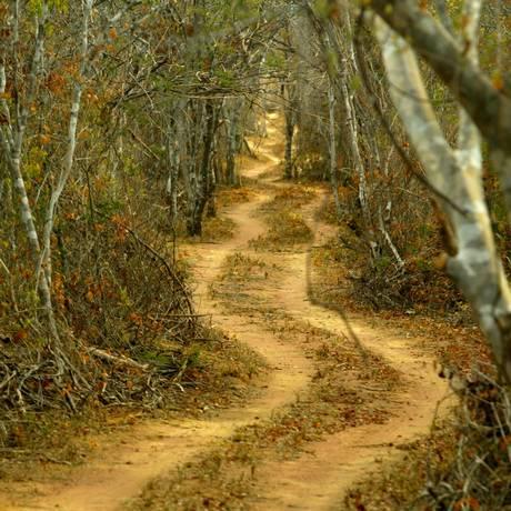 Estradas como essa, aberta no Parque Nacional da Serra da Capivara, no Piauí, contribuem para destruir espécies da Caatinga Foto: Marizilda Cruppe/16-07-2003