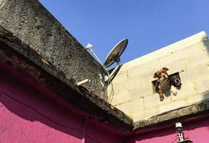 Cachorros na janela improvisada em casa no Morro dos Prazeres Foto: Divulgação/Saulo Nicolai