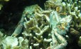 Baixa oxigenação provocou a morte da vida marinha em Bocas del Toro, no Panamá