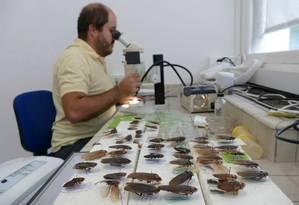 Na França, Vitor Tarli descreveu cinco novas espécies de baratas vistas em caminhadas pela Mata Atlântica Foto: Fernando Eichenberg