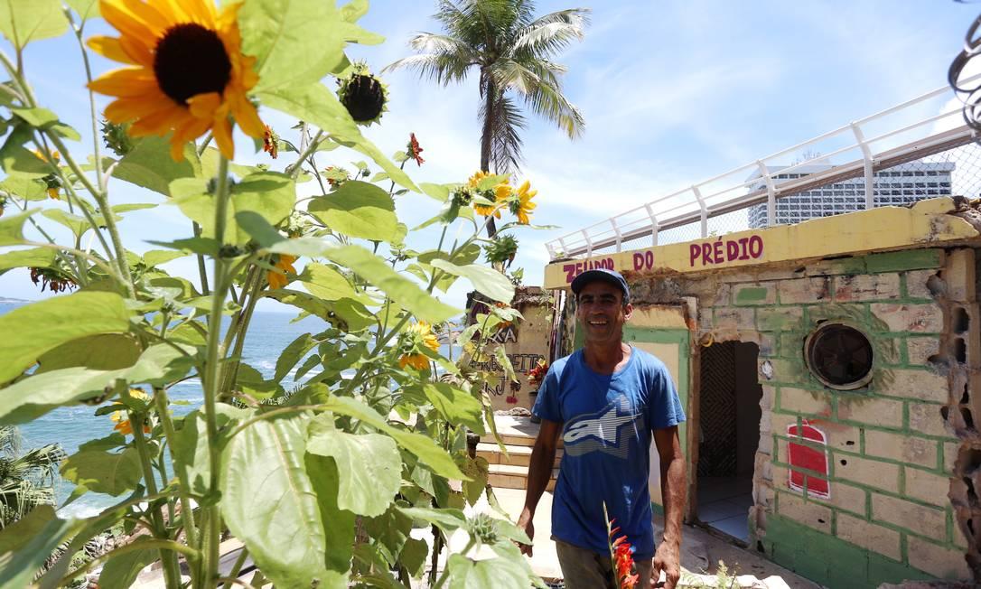 Os girassóis plantados por Joaquim Foto: Fabiano Rocha / Agência O Globo