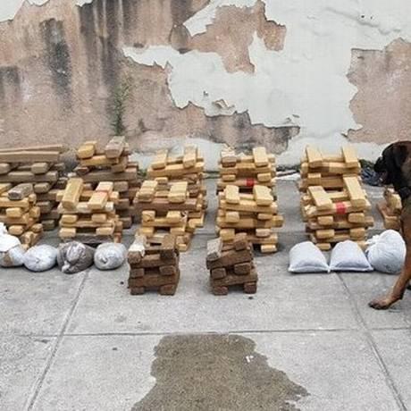Os cães farejadores e a droga apreendida Foto: Polícia Militar / Divulgação