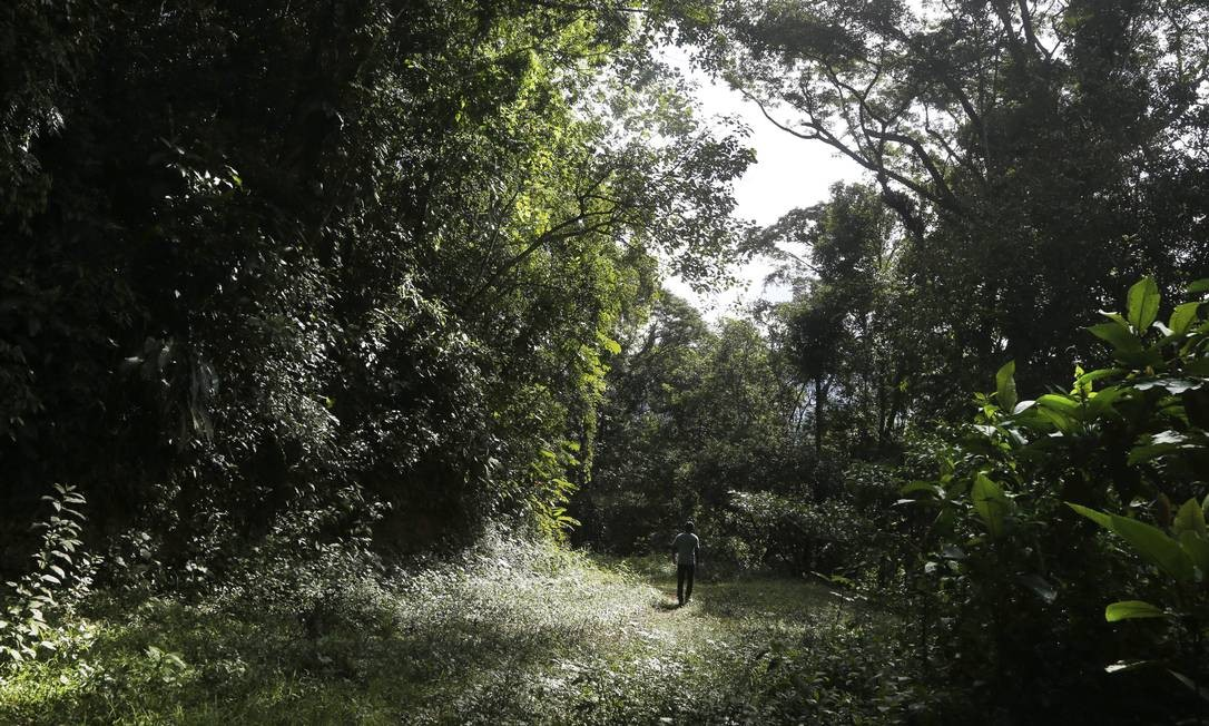 O último chamado do bugio se fez ouvir numa expedição ao Pico do Tinguá, a montanha de 1.600 metros de altura que empresta o nome à região Antônio Scorza / Agência O Globo