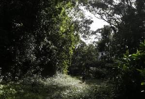 Na densa mata da Reserva do Tinguá, pode estar a resposta para o avanço da febre amarela Foto: Antonio Scorza / Agência O Globo