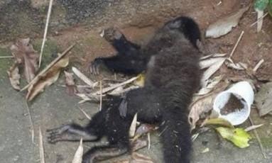 Um dos macacos encontrados mortos nesta segunda, na cidade do Rio Foto: Reprodução