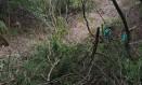 Árvores derrubadas no Morro do Gragoatá Foto: Divulgação/Louise Lomardo
