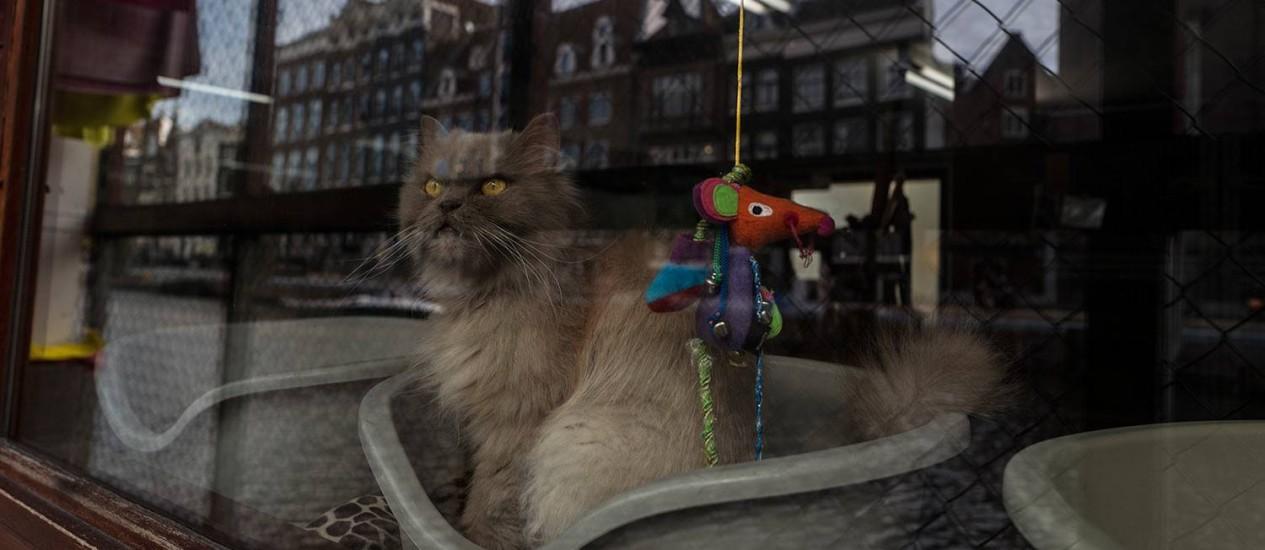 Kasumi, um gato de 9 anos, olha pela janela do Catboat, que reflete um dos canais e prédios de Amsterdã Foto: Muhammed Muheisen / AP