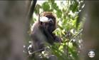 Um macaco foi encontrado morto no Zoológico de SP Foto: TV Globo/Reprodução