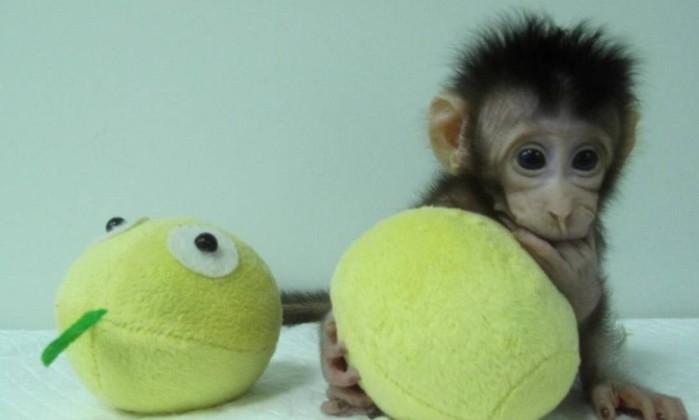 Cientistas chineses realizam primeira clonagem de primatas