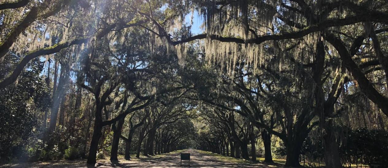 Corredor verde: árvores cobertas por musgo espanhol em Savannah, Geórgia Foto: Henrique Gomes Batista / Agência O Globo