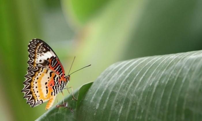 Butterfly House, no Horniman Museums and Gardens, em Londres Foto: Phil Sofer / horniman.ac.uk