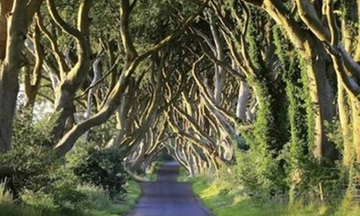 Dark Hedges, em Ballymoney, na Irlanda do Norte Foto: Divulgação