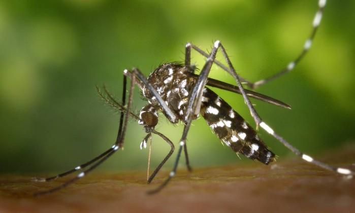 Vírus da febre amarela é detectado em outro tipo de mosquito
