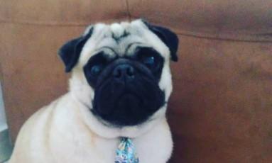 Bob, da raça Pug, foi levado por bandidos em Duque de Caxias Foto: Reprodução