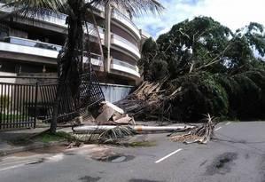 Árvore obstrui parcialmente a Avenida Jarbas de Carvalho